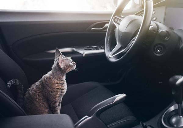 מי נוהג? צילום: Shutterstock