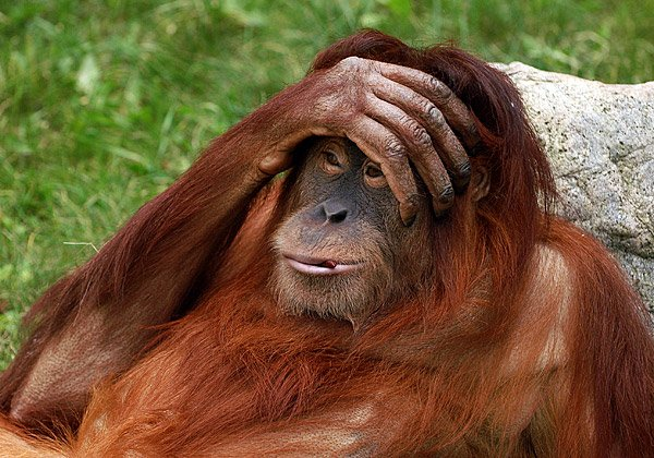 מעניין מה הקופים אומרים על זה... צילום אילוסטרציה: מיכאיל ליאונוב, BigStock