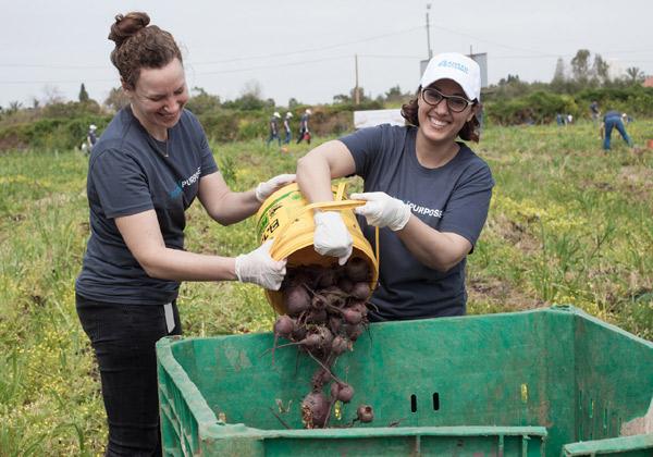 עובדי אפלייד מקלטים ירקות במסגרת פעילות ארגון לקט ישראל ובמחסני לתת. צילום: רון אוריאל
