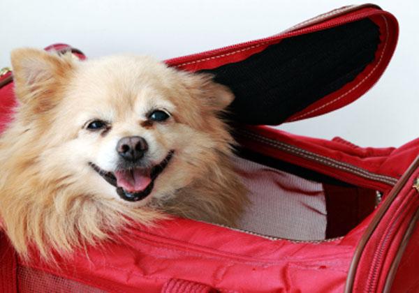 הטסת בעלי חיים. צילום: Terminal 4 Pets